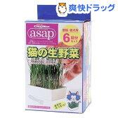 キャティーマン アサップ(asap) 猫の生野菜(6コ入)【170623_soukai】【170609_soukai】【アサップ(asap)】[猫草]