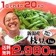 朝採り手摘み枝豆(えだまめ)【茶豆】1kgで2,980円。新潟から産地直送!時期によって品…