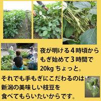 朝採り手摘み【枝豆】