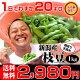 【あす楽】お中元ギフト 朝採り手摘み枝豆(えだまめ)1kgで2,980円。新潟から産地直送…