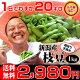 遅れてごめんね 敬老の日 ギフト 【あす楽】黒崎 茶豆!朝採り手摘み枝豆1kgで2,980…