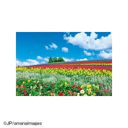 ジグソーパズル 風景 富良野を彩る花の丘(北海道)10-1344 人気 商品 送料無料