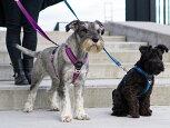 【犬ハーネス】コンフォートウォークプロハーネス【Sサイズ(胴回り46-56cm)】【ドッグコペンハーゲン(DOGCopenhagen)】