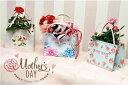 新しいタイプのラッピング★【ミニバッグ】鉢花や贈り物をバッグでラッピング☆彡 - Stellas Better Fortune House