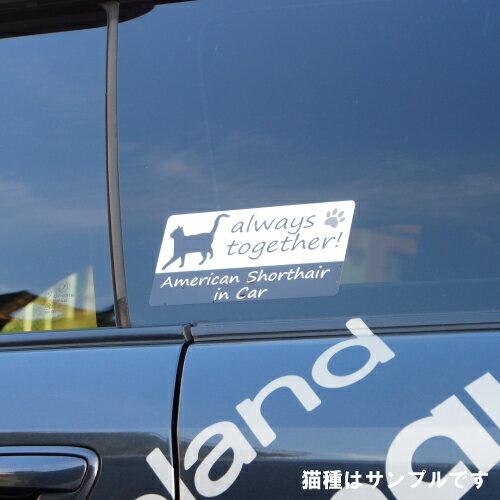 スコティッシュフォールド scottish fold in Car ステッカー プリントタイプ 【Cat in Car キャット インカー 猫 シール デカール】 ラッキーシール