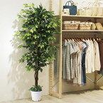 ベンジャミングリーン H210cm夏の爽やかな店内装飾におすすめの人工樹木。エントランスや広い店舗空間にぴったり!幹には天然木を使用しています。オフィスインテリアとしてもおすすめの人工観葉植物です。フェイクグリーン 人工観葉植物 おしゃれ 大型