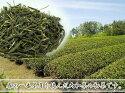 奈良県産大和茶初茶100g【農薬不使用】