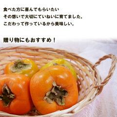 贈り物にもぴったりの美味しい柿を詰めました