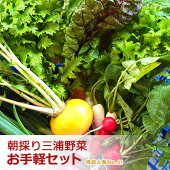 朝採り!旬の三浦野菜お手軽セット