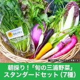 朝採り!「旬の三浦野菜」スタンダードセット[通常7種類前後] 野菜 詰め合わせ 三浦野菜 直販 JGAP取得 ジェイギャップ 減農薬 ギフトに人気