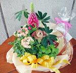 【鉢花】【長崎バウムクーヘン】花鉢とスイーツ【送料無料】