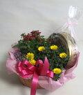 花鉢・観葉植物とスイーツのセットバタークッキーBUTTERCOOKIESチョコレートチップクッキーCHOCOLATECHIPSCOOKIES
