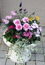母の日の寄せ植え240【送料無料】【母の日】【鉢花】