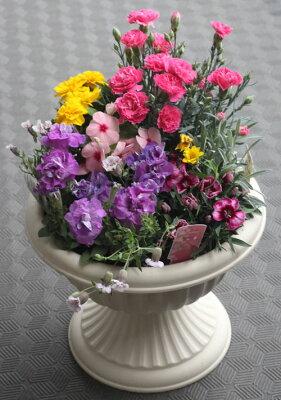 母の日の寄せ植え【母の日】【鉢花】鉢植え フラワーギフト プレゼント 贈り物 カーネーション おしゃれ 豪華