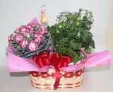 【母の日】ミニトマトとカーネーション(ピック付)【鉢花】寄せ鉢