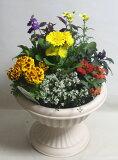 季節の寄せ植えW あす楽 鉢花 寄せ植え フラワーギフト 誕生日 お祝い 開店祝い 発表会ベランダ 玄関【限定付送料無料】