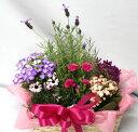 【母の日】季節の寄せ鉢・ギフトセット 453 【あす楽】【鉢花】【送料無料】【RCP】