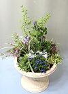 【鉢花】季節の寄せ植え木質系