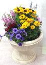 季節の寄せ植えW あす楽 鉢花 寄せ植え ギフト...