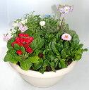 季節の寄せ植えM あす楽 鉢花 寄せ植え ギフト...