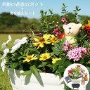 花苗 春 寄せ植え セット ガーデニングに最適です♪ 季節の花苗おまかせ12ポット+寄せ植えセット 送料無料 沖縄・離島を除く