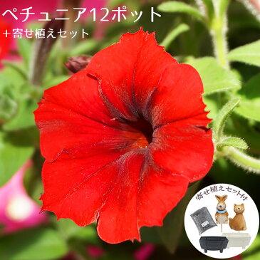 花苗 セット ガーデニングに最適です♪ ペチュニア12ポット+寄せ植えセット【元気でフレッシュな苗 送料無料 沖縄・離島を除く】春 夏