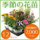 季節の花苗12ポット