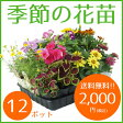 季節の花苗12ポット【送料無料/元気でフレッシュな苗/】