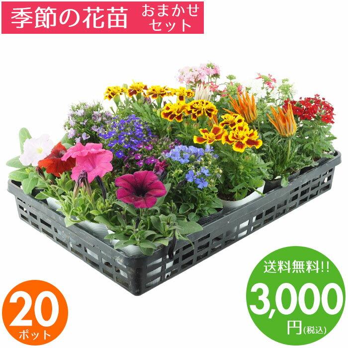 花苗 セット 送料無料 春・夏 のお花おまかせ20ポット ガーデニングに最適です♪沖縄・離島を除く