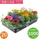花苗 セット 送料無料 春 のお花おまかせ20ポット ガーデ