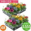 花苗 セット 送料無料 春 のお花おまかせ48ポット ガーデ