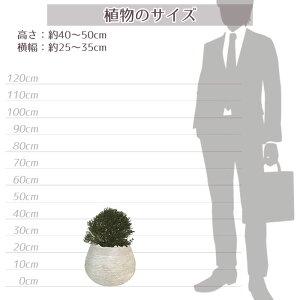 植物サイズ