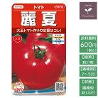 野菜の種実咲野菜0005大玉トマト麗夏