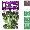 野菜の種 実咲野菜2507 紫セ...