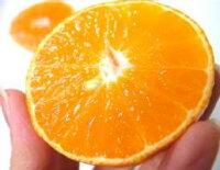愛媛県産<紅まどんな>約3kg☆サイズ混合バラ詰め☆話題の新柑橘をお気軽に!