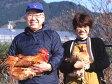 本物の地鶏!名古屋コーチン[ ハーフ ](もも・むね・ささみ各1枚セット)[ 新鮮 国産 鶏肉 ]