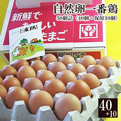 放し飼い 自然卵 一番鶏 「50個詰」(40個+破損保障分10個) [ 鶏卵 千葉県産 香取市 小見川の地卵 庭先たまご タマゴ 卵 玉子 ]※【 冷蔵 限定配送 】※冷凍限定商品とは同梱できません 別途送料がかかります