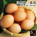 放し飼いののびのびとした環境で育った『鶏』さんたちの産んだ卵だから、とぉっても元気です!【2sp_120405_b】自然卵一番鶏「6個詰」[千葉県産]【2sp_120405_b】