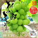 桃太郎ぶどう 大房 約600g〜700g 鳥取県琴浦町 横山ブドウ園産 9月上旬頃より発送