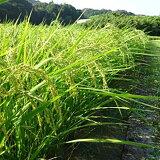 【新米】すくも産コシヒカリ5kg