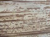 竹皮、1kg、業務用、60x13cm、