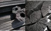 まとめてお得♪ 木炭 太陽炭 10kgと 岩手 ナラ切炭 6kg