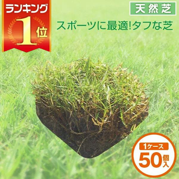 芝生 天然芝 ティフトン芝 ピース 1ケース50個入 送料無料 (芝生 通販)