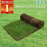 芝生 天然芝 野芝(ノシバ) ロール巻 送料無料 (芝生 通販)