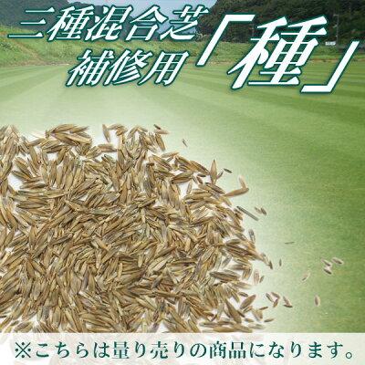 三種混合芝補修用種