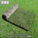 芝生 天然芝 ティフトンライグラス (ティフトン+ライグラスロール巻芝) 送料無料 (芝生 通販)