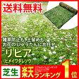 芝生 花マット リピア ヒメイワダレソウ ロール 送料無料 (芝 通販)