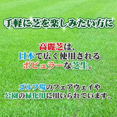 芝生天然芝高麗芝(コウライ芝)ロール巻芝送料無料(芝生通販)