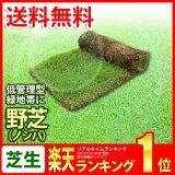 芝生 野芝(ノシバ) ロール巻 送料無料 (芝 通販)