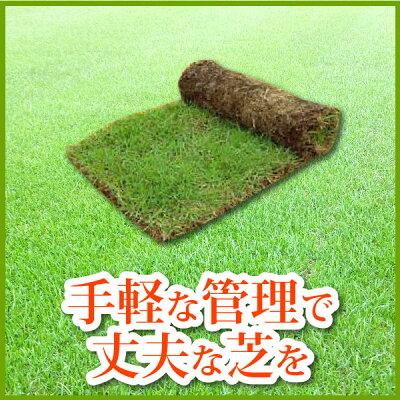 野芝(ノシバ)ロール巻【レビューで豪華景品!ポイント2倍!】送料無料芝生通販